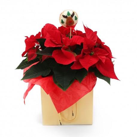 Growing Gifts - Festive plants