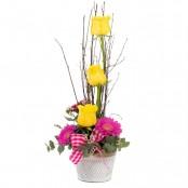 Raindrops on Roses (Yellow)